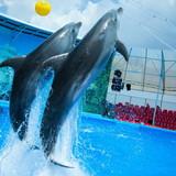 """Изображение дельфинария """"Дельфинарий «Немо Феодосия»"""" #15"""