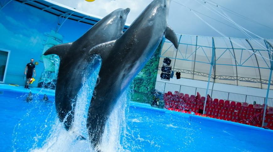 """Изображение дельфинария """"Дельфинарий «Немо Феодосия»"""" #4"""