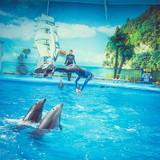 """Изображение дельфинария """"Дельфинарий «Немо Феодосия»"""" #16"""