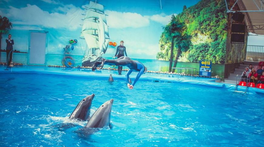 """Изображение дельфинария """"Дельфинарий «Немо Феодосия»"""" #5"""
