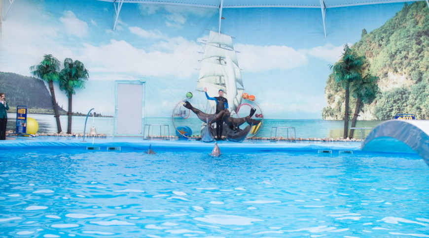 """Изображение дельфинария """"Дельфинарий «Немо Феодосия»"""" #6"""