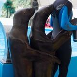 """Изображение дельфинария """"Дельфинарий «Немо Феодосия»"""" #19"""
