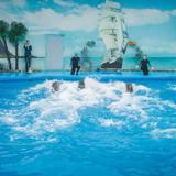 """Изображение дельфинария """"Дельфинарий «Немо Феодосия»"""" #20"""