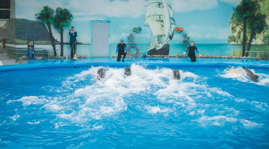 """Изображение дельфинария """"Дельфинарий «Немо Феодосия»"""" #9"""