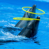 """Изображение дельфинария """"Дельфинарий «Немо Феодосия»"""" #22"""
