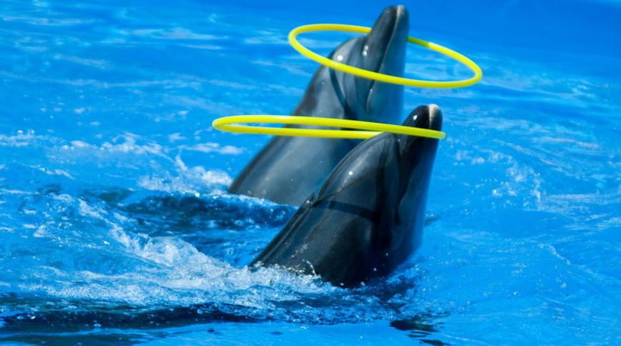 """Изображение дельфинария """"Дельфинарий «Немо Феодосия»"""" #11"""