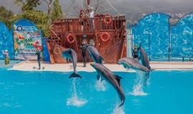 """Изображение дельфинария """"Дельфинарий """"Акватория"""""""""""