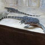 "Изображение зоопарка ""Крокодиляриум Ялтинский"" #14"