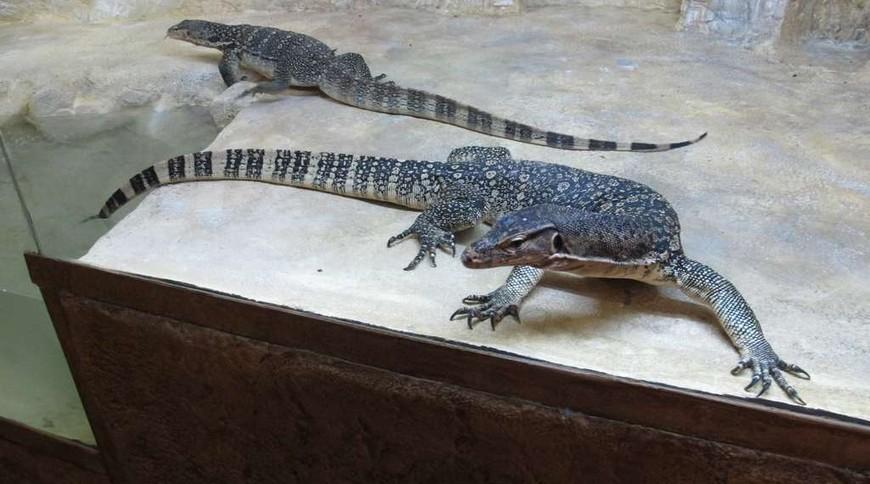 "Изображение зоопарка ""Крокодиляриум Ялтинский"" #6"