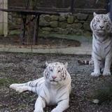 """Изображение зоопарка """"Зоопарк """"Сказка"""""""" #11"""
