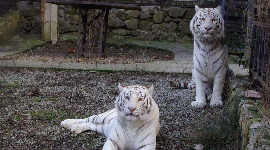 """Изображение зоопарка """"Зоопарк """"Сказка"""""""" #3"""