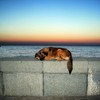 Resting dog on Black sea